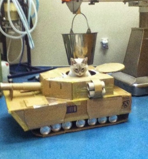 Top 10 Pictures of Cats in Tanks