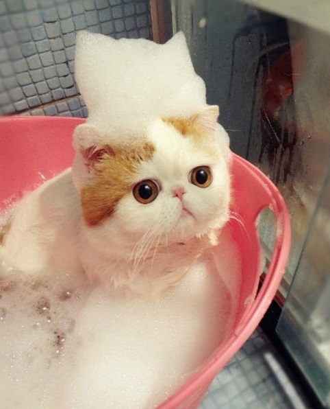 Top 10 Cats in Bubble Baths