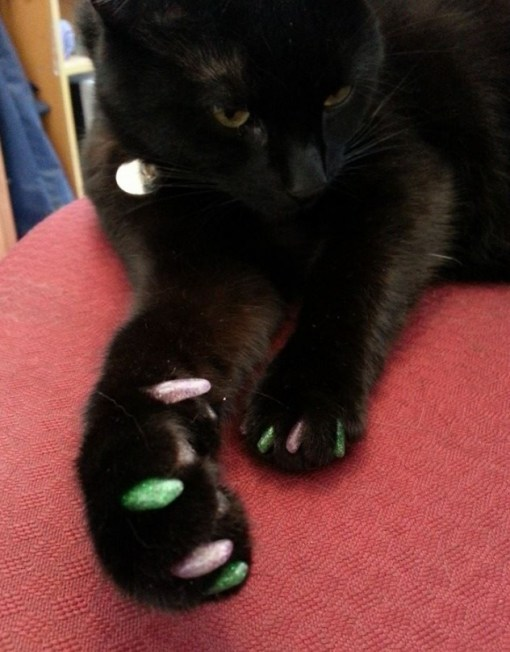 Top 10 Cats With Painted Claws