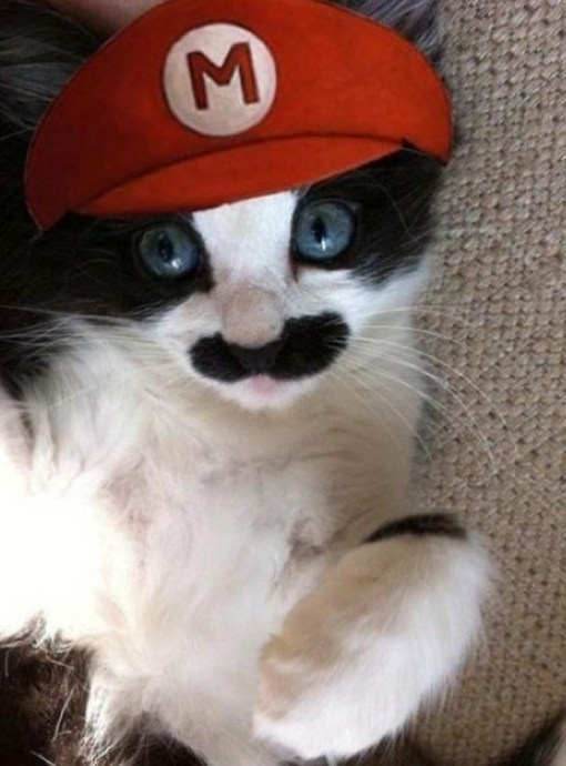 Top 10 Cats in Super Mario Costumes