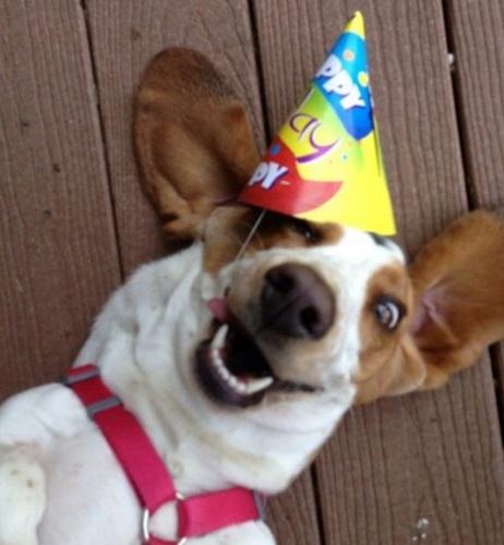 Celebrating Your Dog S Birthday
