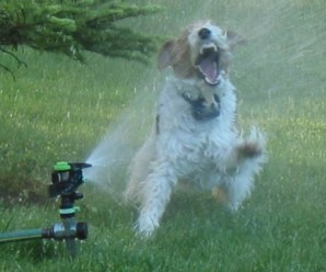Top 10 Ways To Cool Down Your Dog This Summer