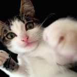Top 10 Cats Who Are Lean Mean Fighting Machines