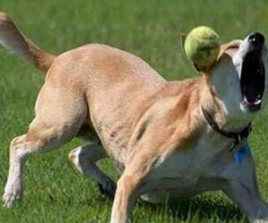 Top 10 Fail Dogs Who Suck At Playing Fetch