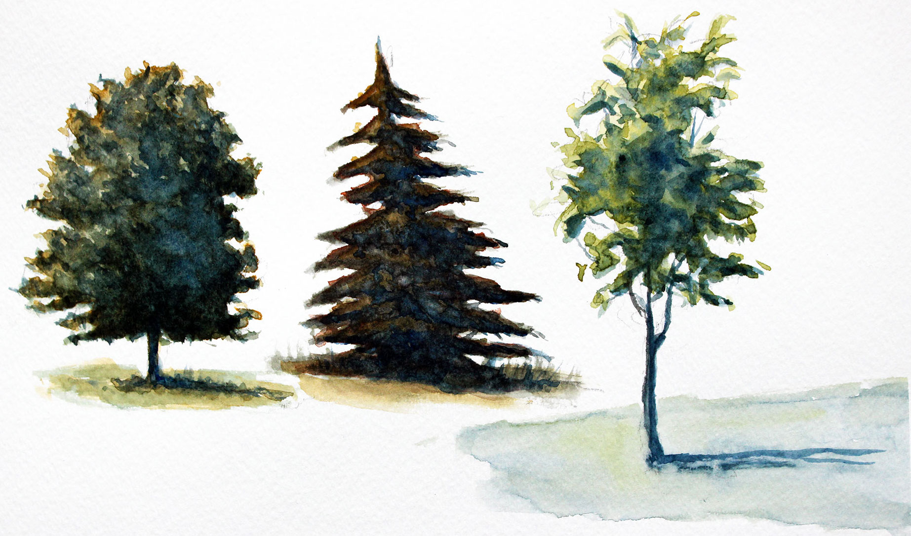 Tree Drawing With Watercolor How To Paint Trees With Watercolor