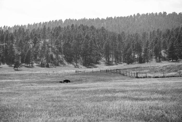 Custer State Park 24