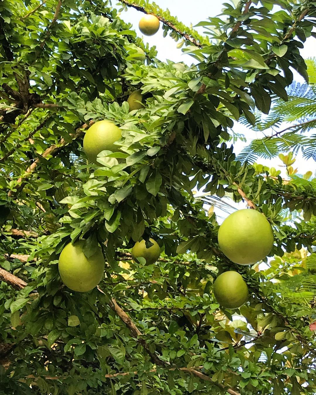 niki mirakelfrukt tupawarefrukt