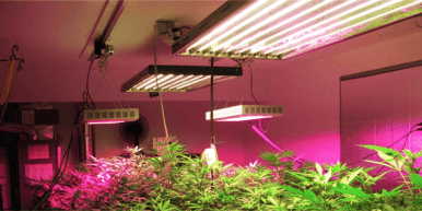 Flowering Light Cycle