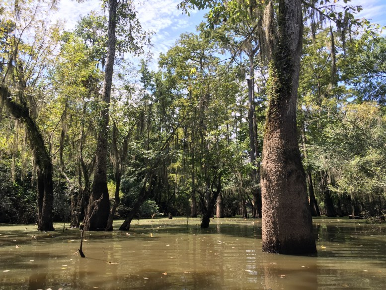 swamp-tour-new-orleans-2