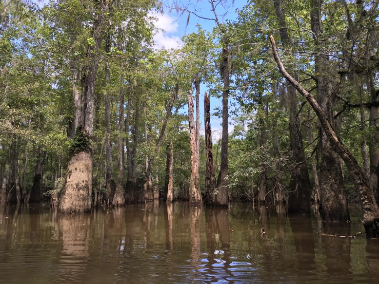 swamp-tour-new-orleans
