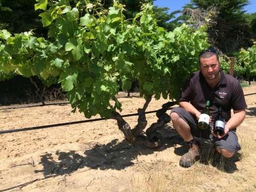 Marco Cirillo with old vine 1850s Semillon