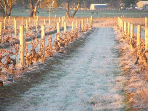 vineyardP1040592