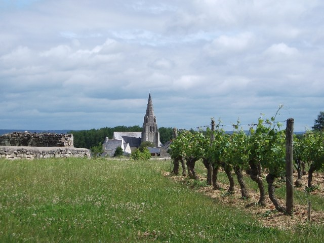 Saumur-Champigny