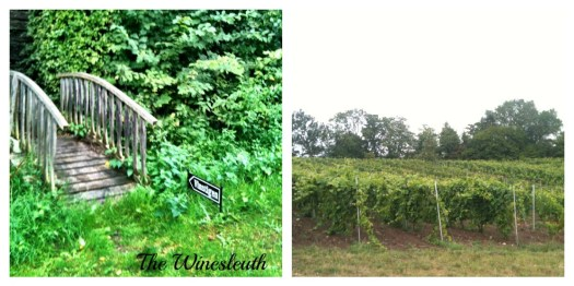 this way to the vines
