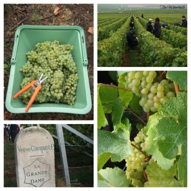 2012 Harvest Collage