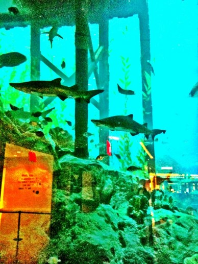 sharks in the aquarium