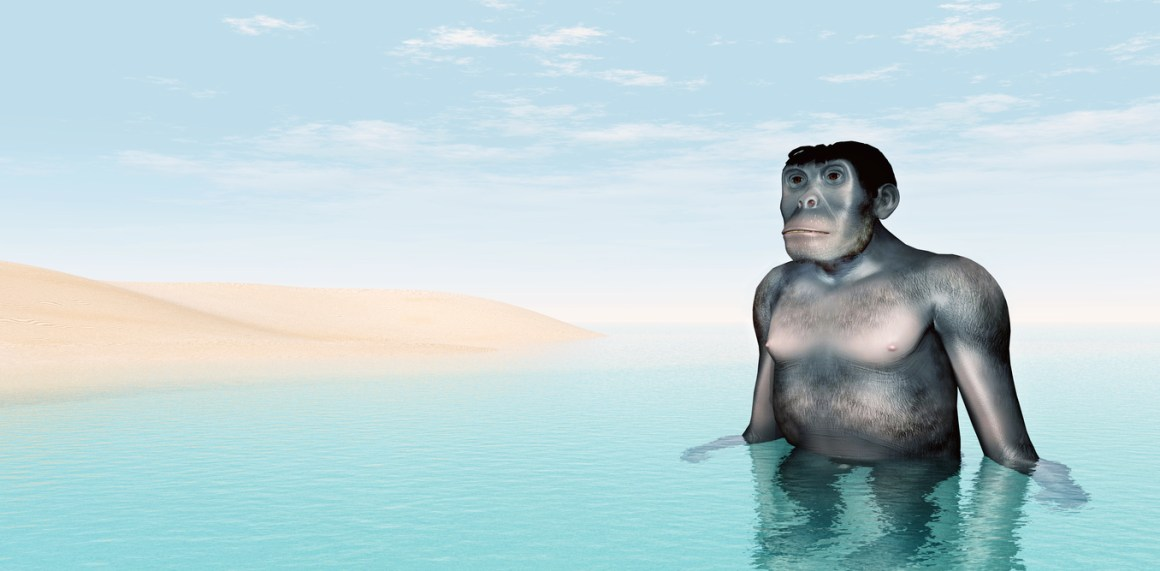 An aquatic ape. Credit: Michael Rosskothen/shutterstock