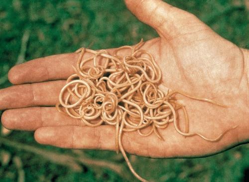 Препараты при всех видах паразитов