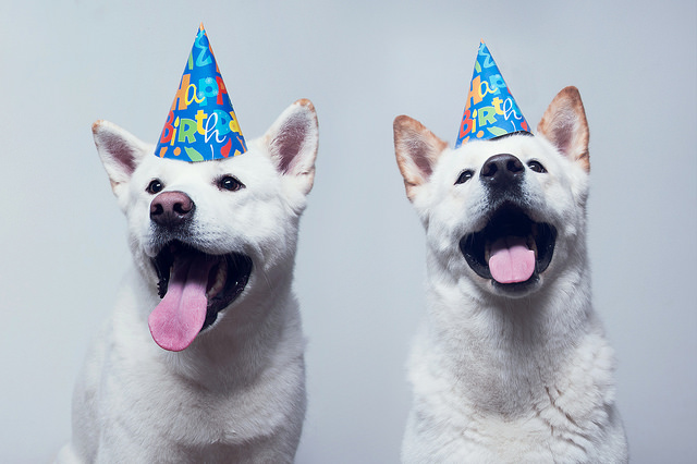 Cute Saying Hd Wallpapers 30 Dogs Celebrating Birthday With Special Dog Birthday Cakes