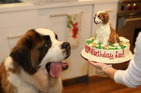 Funny Rap Quotes Wallpapers 30 Dogs Celebrating Birthday With Special Dog Birthday Cakes