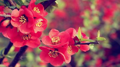 30 Beautiful Flower Wallpapers – The WoW Style