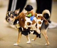 Cute Dog in Toy Story Halloween Costume