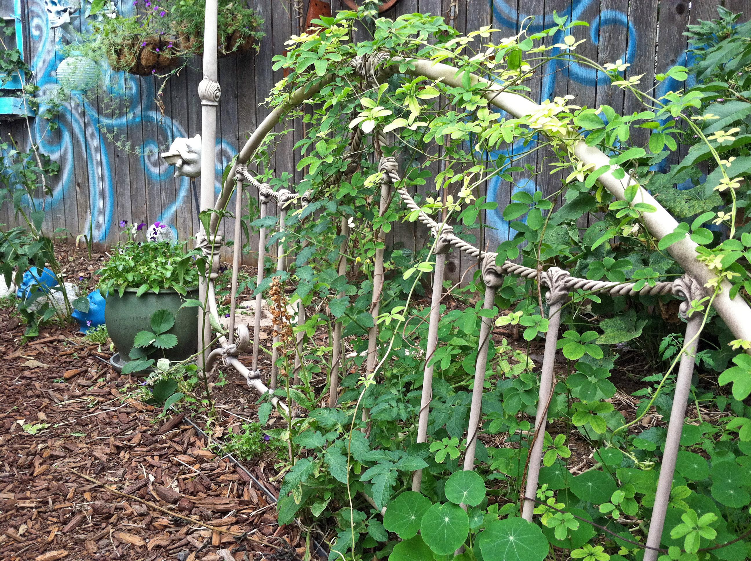 Part 2! Big Crazy Bohemian Gardenits Not Mine, its