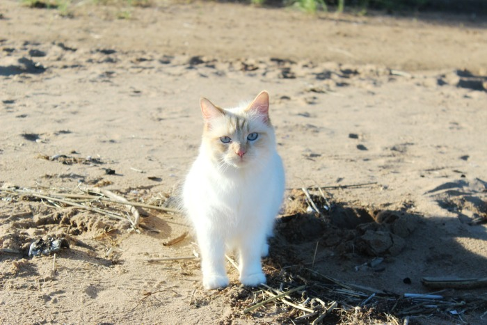 cleo meow meow