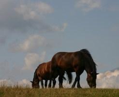 horses1201-2