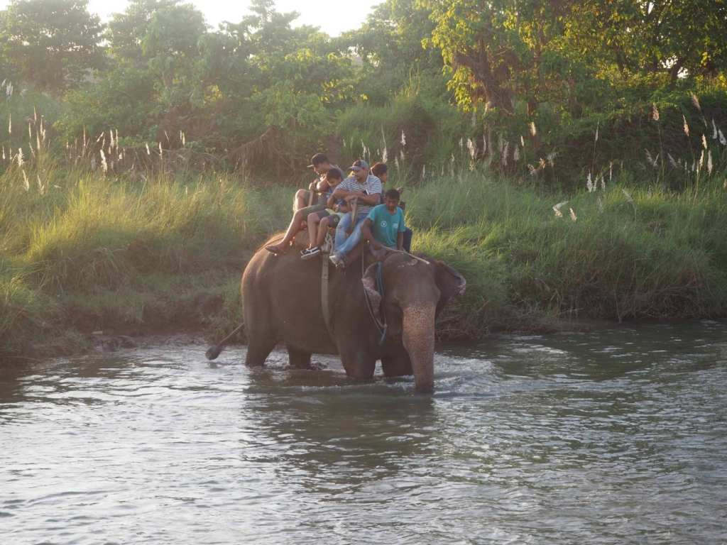 WHY YOU SHOULD NEVER DO AN ELEPHANT SAFARI IN CHITWAN NATIONAL PARK