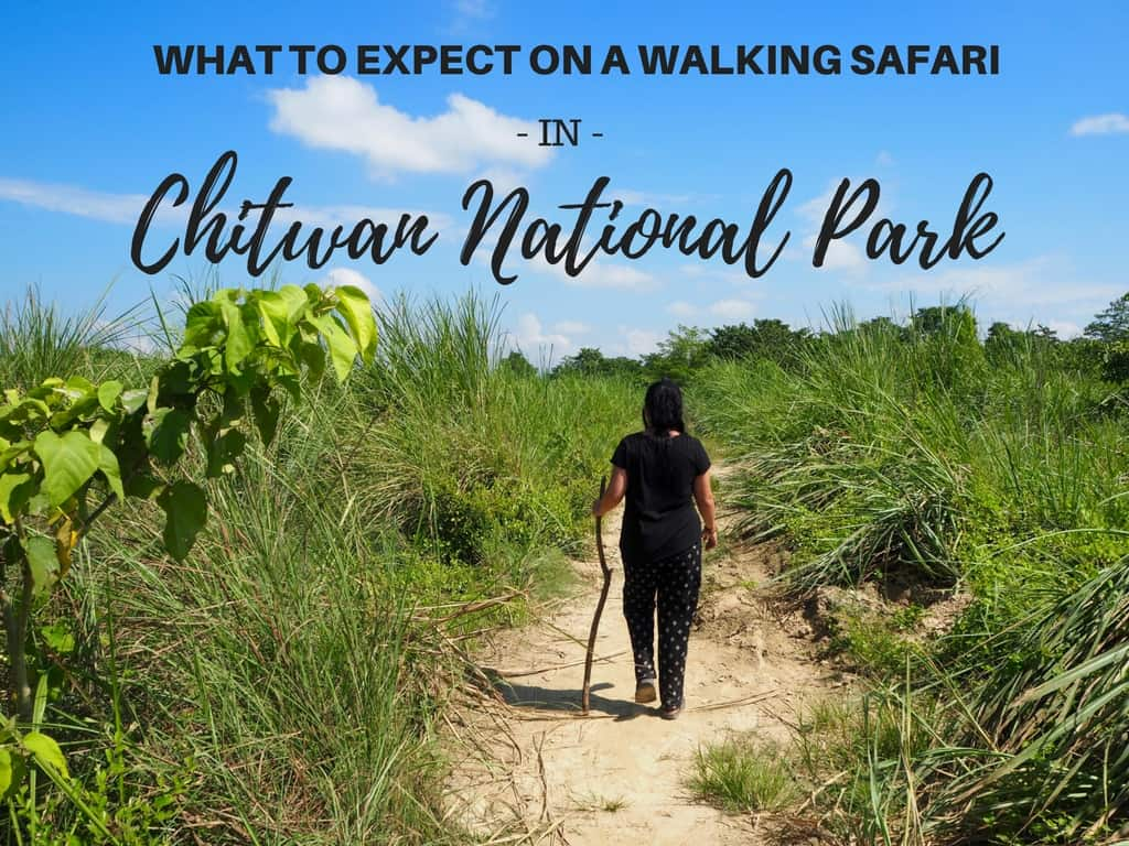 WHAT TO EXPECT ON A WALKING SAFARI IN CHITWAN NATIONAL PARK