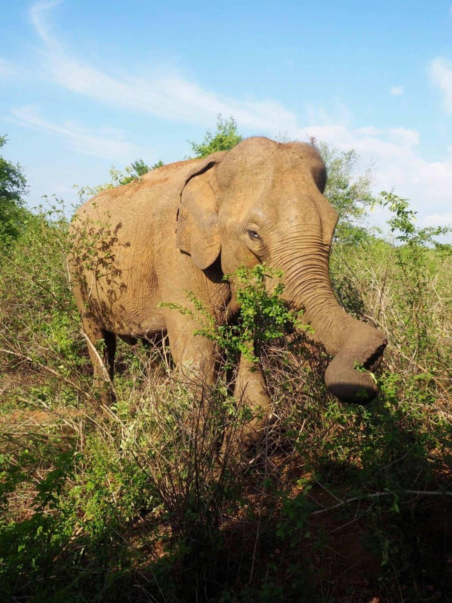 http://thirdeyetraveller.com/kottawatta-village-udawalawe-review/