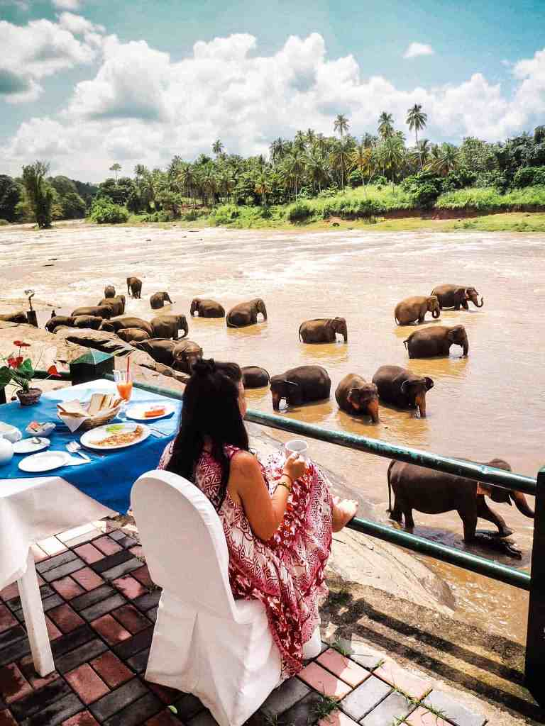 THE ULTIMATE GUIDE OF HOW TO HAVE BREAKFAST WITH ELEPHANTS IN SRI LANKA