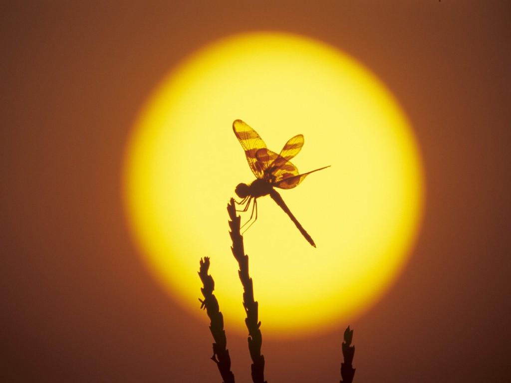 Fighting Wallpaper Hd Animals Illuminated By Sunset Photo Gallery Karma Jello