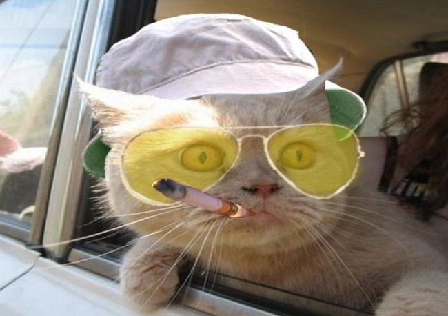 Bad 24 Online Shop Funny Animals Wearing Glasses Photo Gallery - Third Monk
