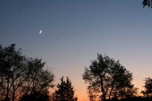 moon, sunset, silhouette