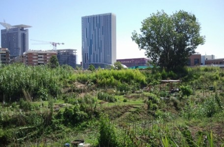 South Rome City Farm
