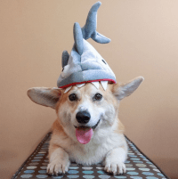 Here Are Our Top 13 Dog Costumes for Halloween  This Dog ...
