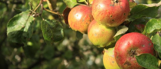 Cider - A Beginners Guide