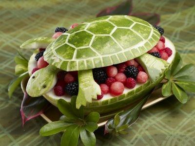 turtle-2-hi1