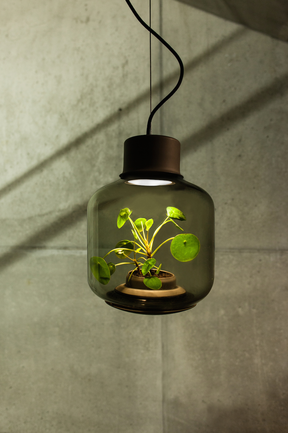 Lamp Plant Terrarium Lamps By Nui Studio Light Your Space With Suspended