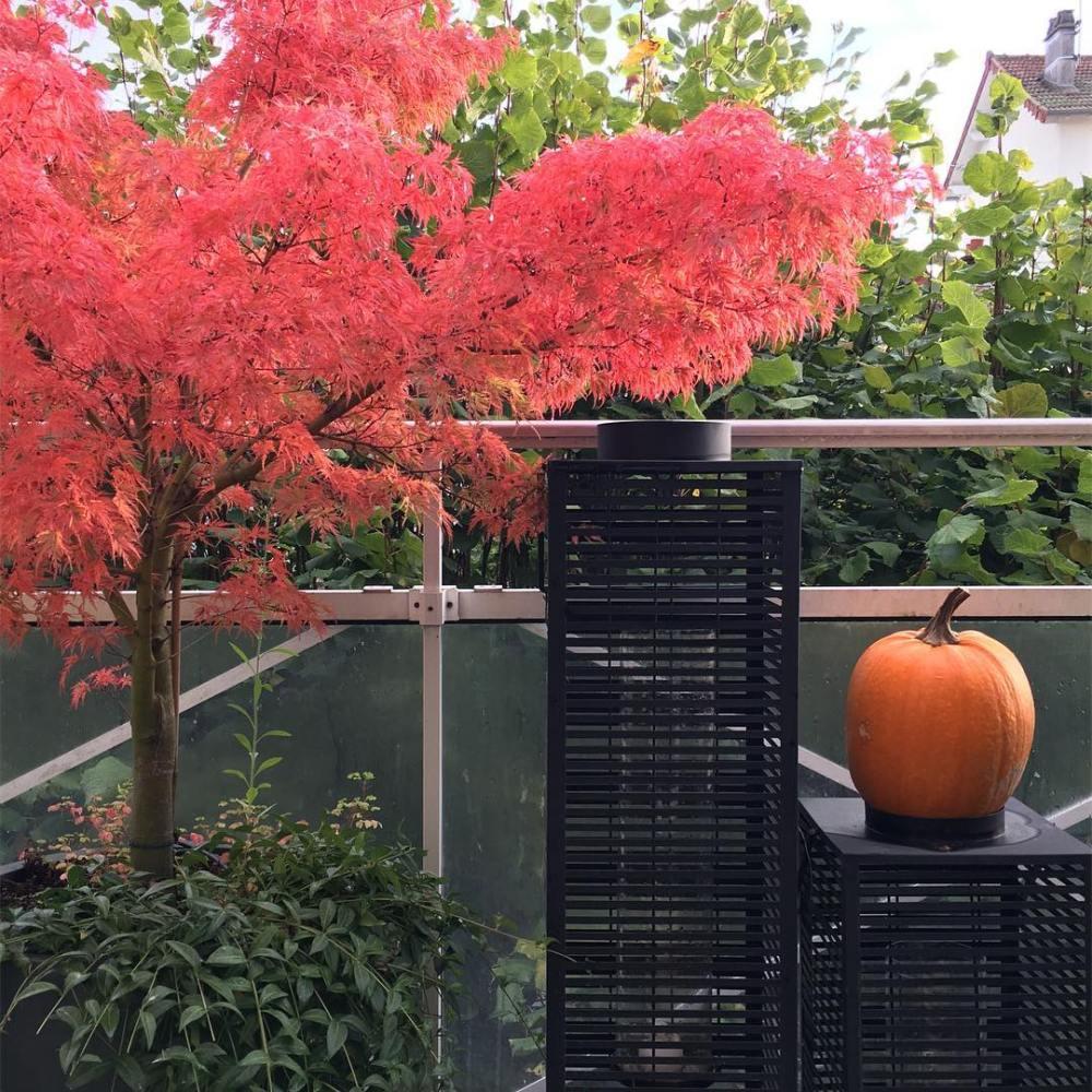 Les jolies couleurs dautomne sur la terrasse des parents