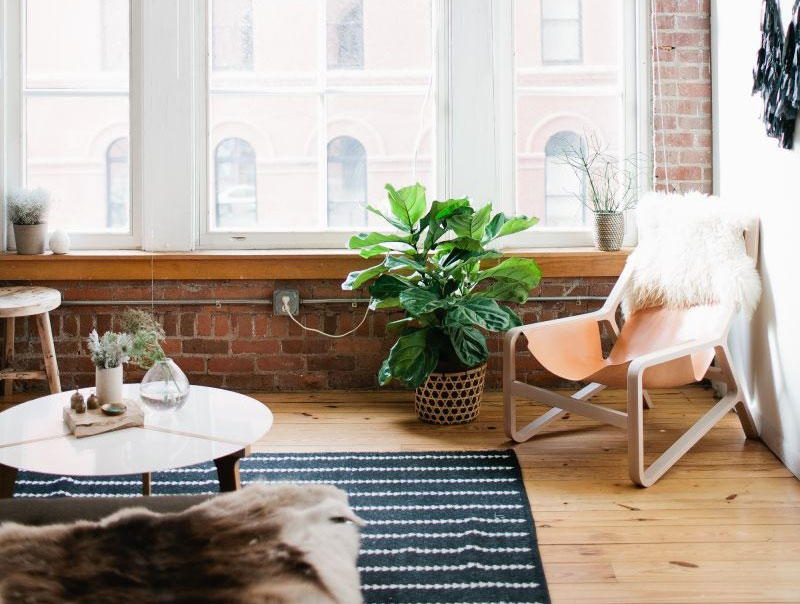 The-Everygirl-Easy-house-plants-feature
