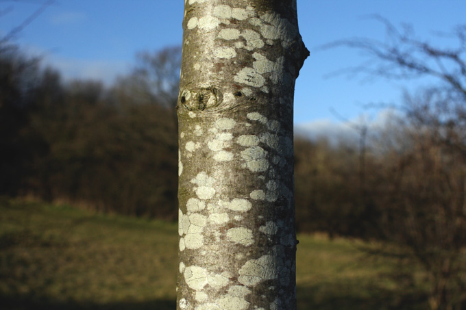 Patterned bark