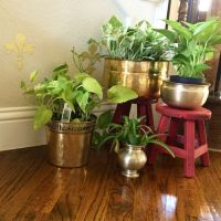 Decorating Plants Indoor - The Indian Way   Threads