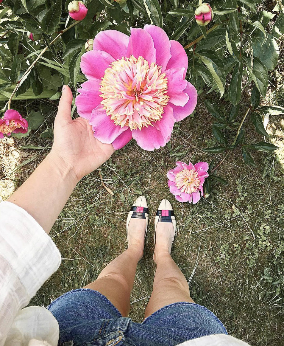 Perennials for your Cutting Garden - Different Peony Varieties