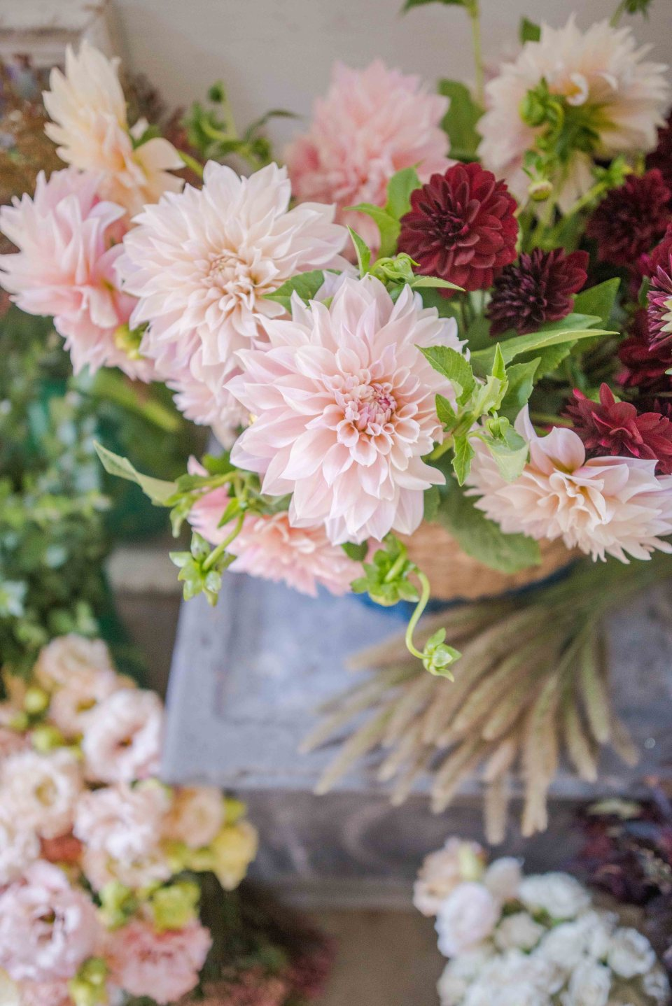 Beautiful Flowers - Cafe au Lait Dahlias