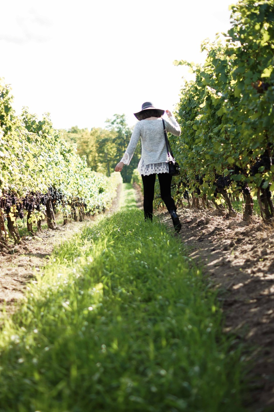 5 Wineries to Visit in the Niagara Region