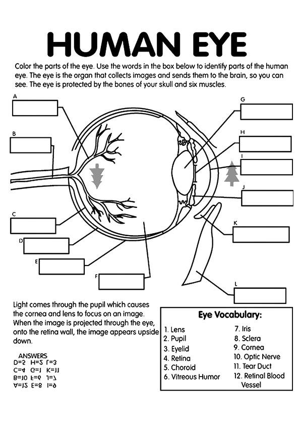 physics body diagrams handout answers my school blog