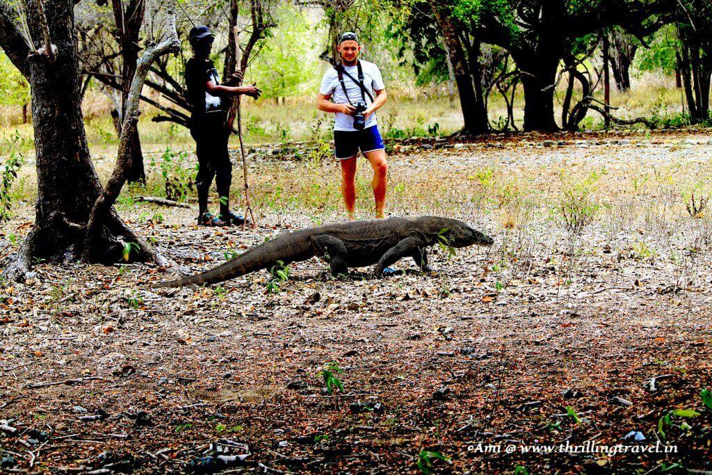 Komodo Dragon at Komodo National Park